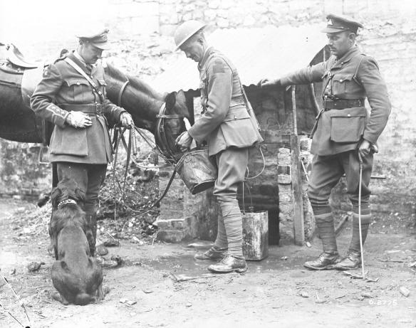 Photographie noir et blanc de trois hommes (deux officiers et un soldat), un cheval et un chien. Le soldat donne un seau de grain au cheval.