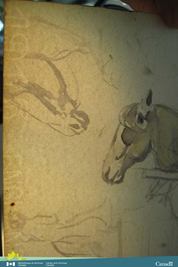 Une photographie en couleur illustrant le dessin à l'aquarelle d'un cheval. Au bas de la feuille, on peut voir l'impression délicate du filigrane « 1915 England » (1915 Angleterre).