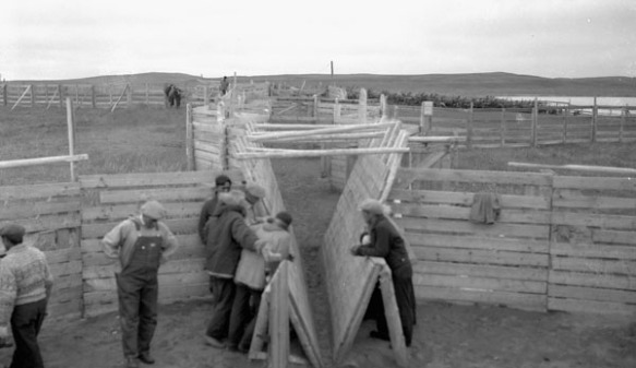 Photographie en noir et blanc d'un groupe d'hommes debout autour d'une petite loge à passerelles pour les rennes.
