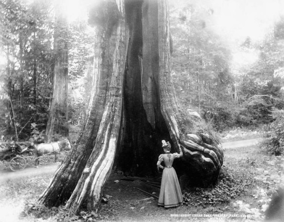 Photographie noir et blanc d'une femme debout au pied d'un immense arbre creux à la base.