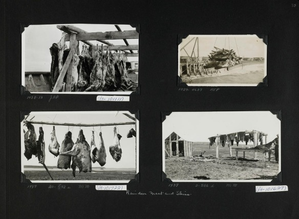 Photographie en noir et blanc d'un collage d'album à photos. Il y a quatre photographies montrant des carcasses de rennes et des peaux mises à sécher.
