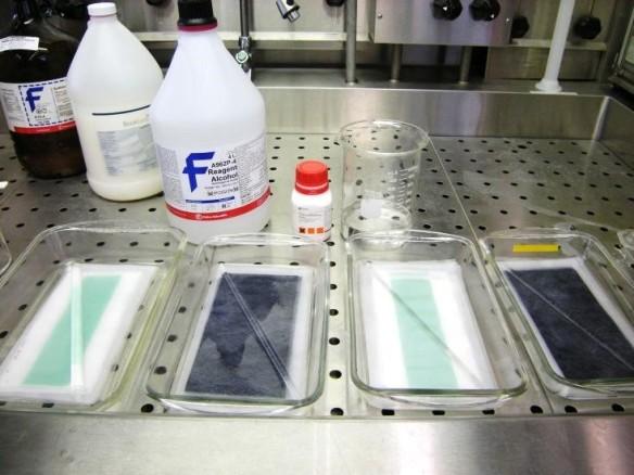 Photographie en couleur du matériel de laboratoire : quatre contenants de verre transparent placés côte à côte et renfermant chacun une feuille de papier et, en arrière-plan, des bouteilles de produits chimiques.