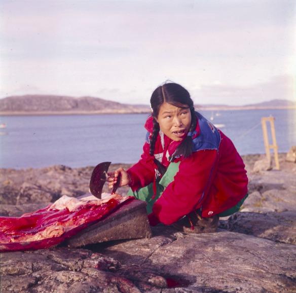 Photo en couleurs d'une femme inuite portant un manteau rouge. Elle est accroupie sur un littoral rocheux et retire la graisse de la peau d'un phoque avec un ulu (le couteau des femmes).