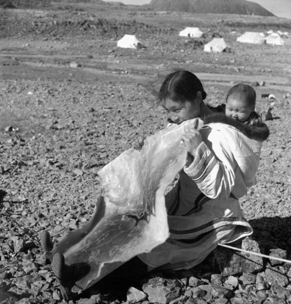 Photo noir et blanc d'une femme inuite assise sur le sol, avec un bébé dans son amauti (parka). Elle mâche un gros morceau de peau de phoque.