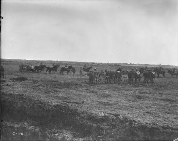 Une photographie en noir et blanc montrant au moins trois équipes de six chevaux transportant des canons aux endroits stratégiques.