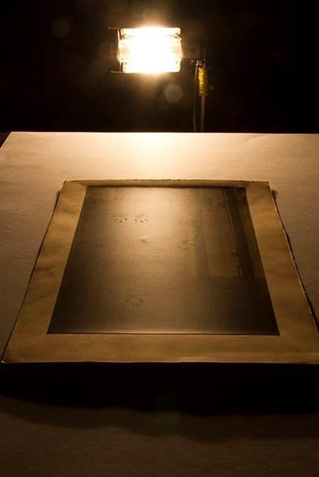 Une photographie placée sur une table, sous un puissant éclairage de côté, révèle la présence d'empreintes de chat.