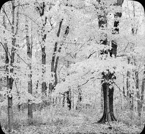 Photographie en noir et blanc d'un bosquet, probablement prise à l'automne.