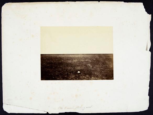 Représentation aux teintes sépia d'herbes des prairies qui s'élancent vers le ciel, avec un crâne et un os à l'avant-plan.