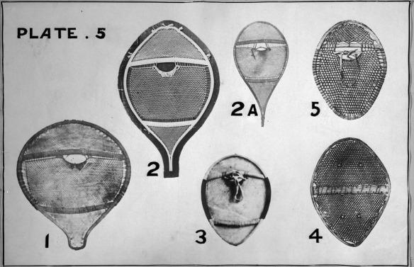 Photographie en noir et blanc montrant six types de raquettes rondes et ovales composées de divers matériaux et styles de lacis.