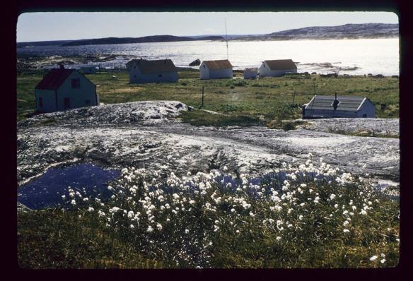 Photographie couleur d'un groupe de maisons de bois sur les rives d'un plan d'eau. Il y a des fleurs sauvages au premier plan.