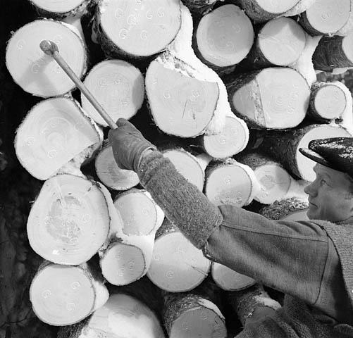 Photo noir et blanc d'un bûcheron qui poinçonne la lettre « G » (pour Gatineau) de l'entreprise sur les extrémités des billes de 16 pieds.