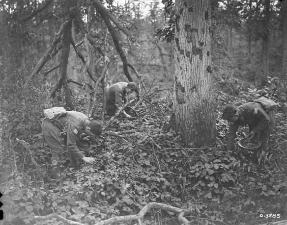 Photo noir et blanc de trois soldats penchés, cueillant des mûres près des arbres et dans les buissons.