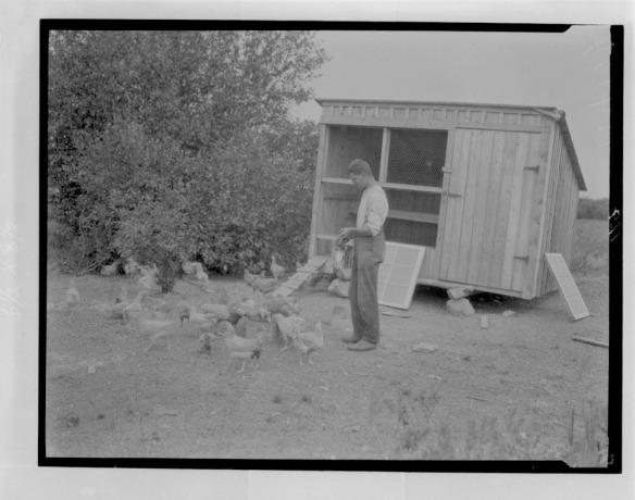Photo noir et blanc d'un homme nourrissant des poules à côté d'un poulailler.