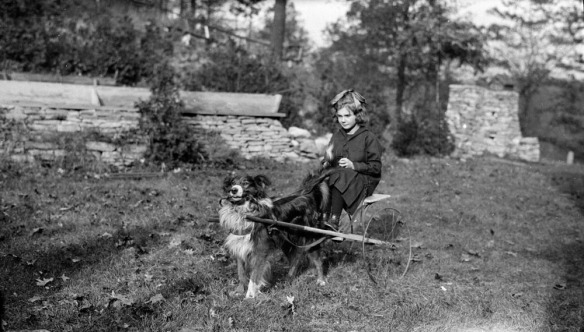 Photo noir et blanc d'un chien attelé à une petite charrette à deux roues; une fillette, assise sur la charrette, tient les rênes.