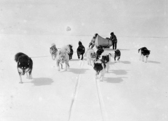 Photo noir et blanc montrant onze chiens tirant un traîneau dans la neige. Le traîneau transporte un grand canot, que deux hommes tentent de maintenir en équilibre.