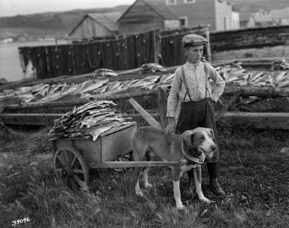 Photo noir et blanc d'un garçon avec son chien; l'animal est attelé à une charrette à deux roues remplie de morue séchée.