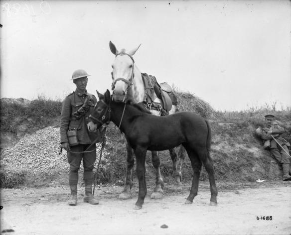 Photo noir et blanc d'un soldat debout sur une route, tenant les rênes de sa jument et de son poulain (un mulet).