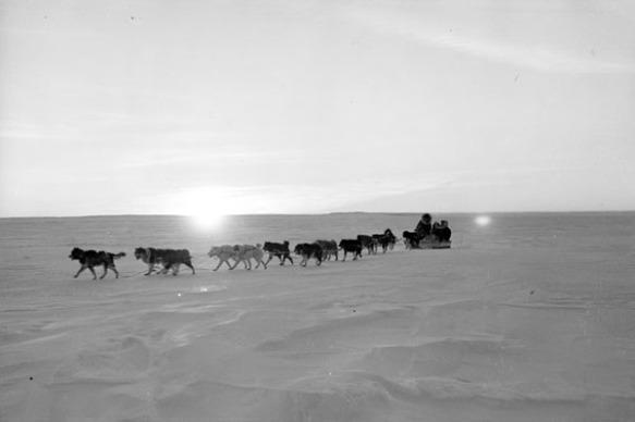 Photo noir et blanc d'un attelage de chiens tirant un traîneau sur une vaste étendue de neige.