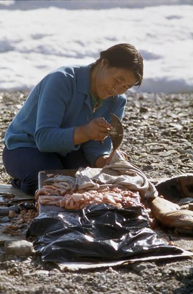 Photo couleur d'une femme inuk coupant de la viande à l'aide d'un ulu.