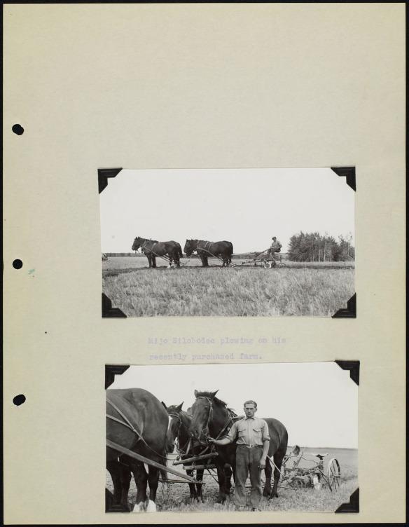 Page d'album avec deux photos noir et blanc, l'une montrant un attelage de chevaux tirant une charrue, et l'autre montrant un homme debout à côté de son attelage. Chaque photo est accompagnée d'une légende dactylographiée.