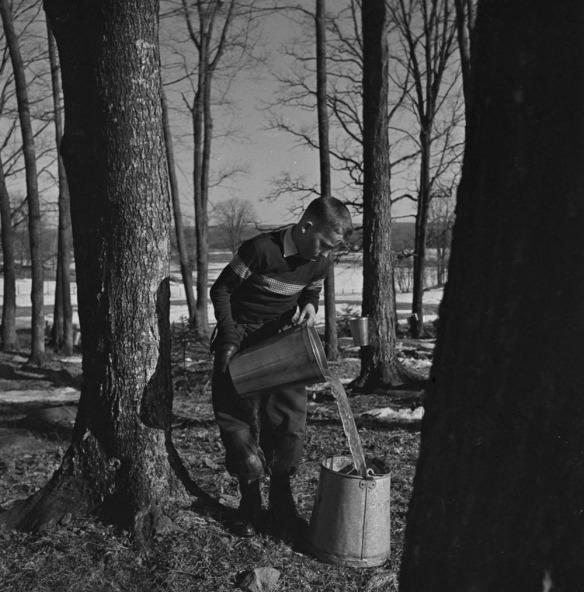 Photo noir et blanc de Jerry Boyce dans une érablière, versant une chaudière d'eau d'érable dans un plus grand contenant.
