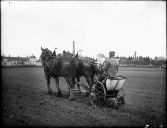 Photographie noir et blanc d'un homme à bord d'une planteuse de pommes de terre tirée par deux chevaux.