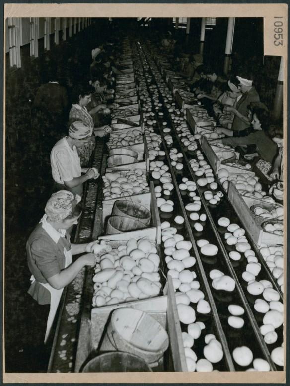 Photographie noir et blanc d'ouvrières d'usine participant à la préparation et à la production de pommes de terre.