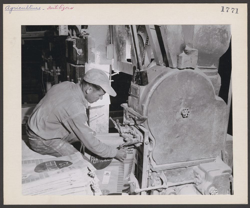 Photographie noir et blanc d'un travailleur remplissant un sac en le tenant sous le bec verseur d'une machine. Une pile de sacs vides se trouve près de lui. On peut lire sur les sacs : « CIL Fertiliser ».