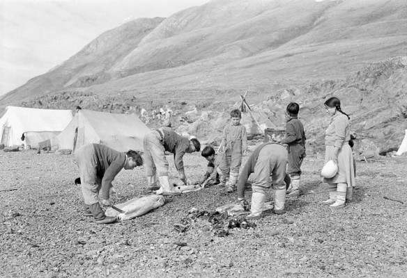 Photo noir et blanc montrant quatre adultes et trois enfants qui dépècent des phoques sur une plage rocheuse. À l'arrière-plan, on voit des tentes en toile.
